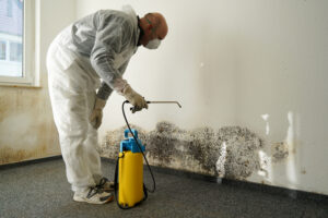 Call Us Now for Residential Mold Removal in Del Mar CA