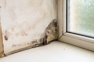 What Do I Do About Extensive Mold Damage in My Fallbrook CA Home?