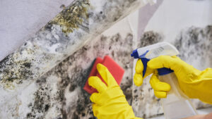 Is it Expensive to Get Mold Removal Service in Vista CA?