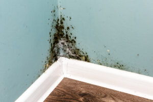 What's the Difference Between Mold and Mildew, and How Do I Get it Removed in Solana Beach CA?