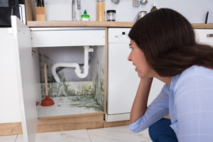 How to Prevent Mold from Recurring in Your Fallbrook CA Household