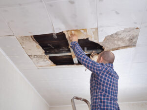 Trustworthy Mold Damage Restoration in San Marcos CA