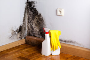 Does At-Home Mold Remediation Work? Why Professional Mold Removal in Del Mar CA is Better