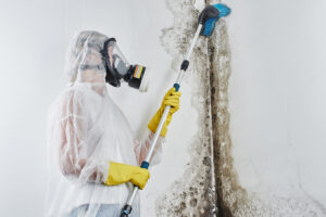 Make Your Home Safer with Top Rated Mold Removal in Encinitas CA