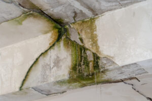 Learn About the Six Steps of Mold Restoration in Rancho Santa Fe CA
