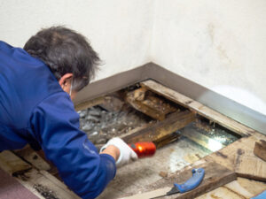 Get the Best Mold Restoration Service in Carlsbad CA Thanks to 1st Choice Plumbing, Flood & Restoration