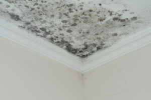Lies You've Been Told About Mold in Del Mar CA