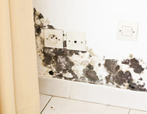 Mold Only Gets Worse if You Leave it Unattended in Your Escondido CA Home