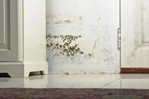 Get Professional Mold Restoration in Fallbrook CA Before Your Thanksgiving Dinner