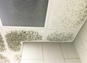 Ready to Kick Mold to the Curb? Get Mold Removal Service in Vista CA