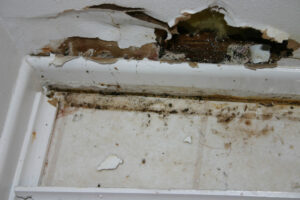 Never Resolve a Mold Issue on Your Own in Del Mar CA