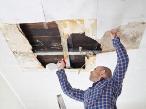 Get Great Deals on Mold Damage Restoration in Encinitas CA