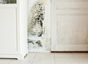 How Long Does Mold Damage Repair Take in Carlsbad CA?