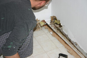 Mold Forms in Just One to Two Days After Water Damage in Vista CA