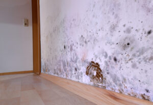 Save $250 on Mold Restoration Service in Del Mar CA