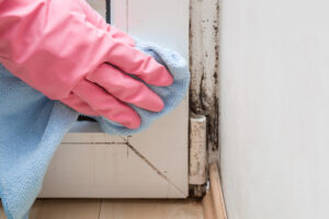 Here's How Solana Beach Experts Tackle Mold in Homes