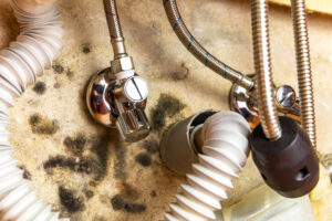 How Long Does Mold Damage Restoration Take in Solana Beach CA?