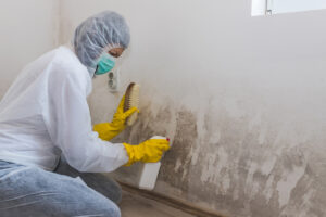 How Mold Restoration in San Marcos CA Can Improve the Value of Your Property
