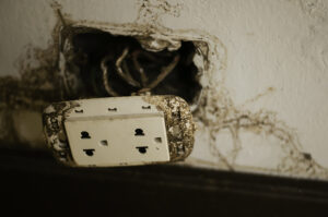 Long Term Mold Damage in Carlsbad CA is a Bigger Deal Than You Thought