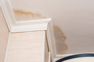 Water Leak Detection in Cardiff CA is a Critical Component of Getting a Grip on Mold Growth