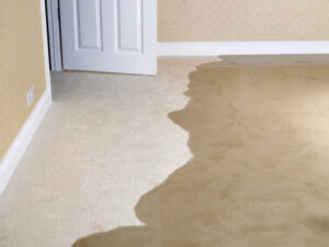 Get Rid of Water on Carpet After a Household Flood in Cardiff CA