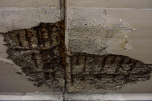 Resolve Mold in Your Basement in Your Vista CA Home