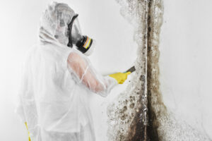 From Inspection to Restoration, We'll Be a Part of the Entire Mold Removal Process in Del Mar CA