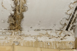 Mold Has No Place in the Home - Get Mold Restoration in Carlsbad CA