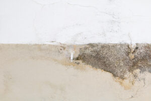 Schedule an Appointment for Mold Removal in Encinitas CA