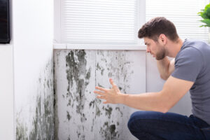 Lies You've Been Told About Mold Damage in Escondido CA