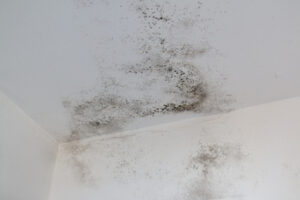 Who Do You Hire to Get Rid of Mold in Vista CA?